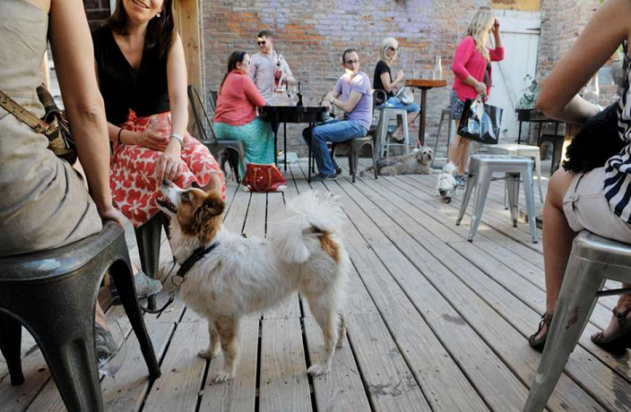 Alipay Now Finding Pet-Friendly Restaurants in Shanghai