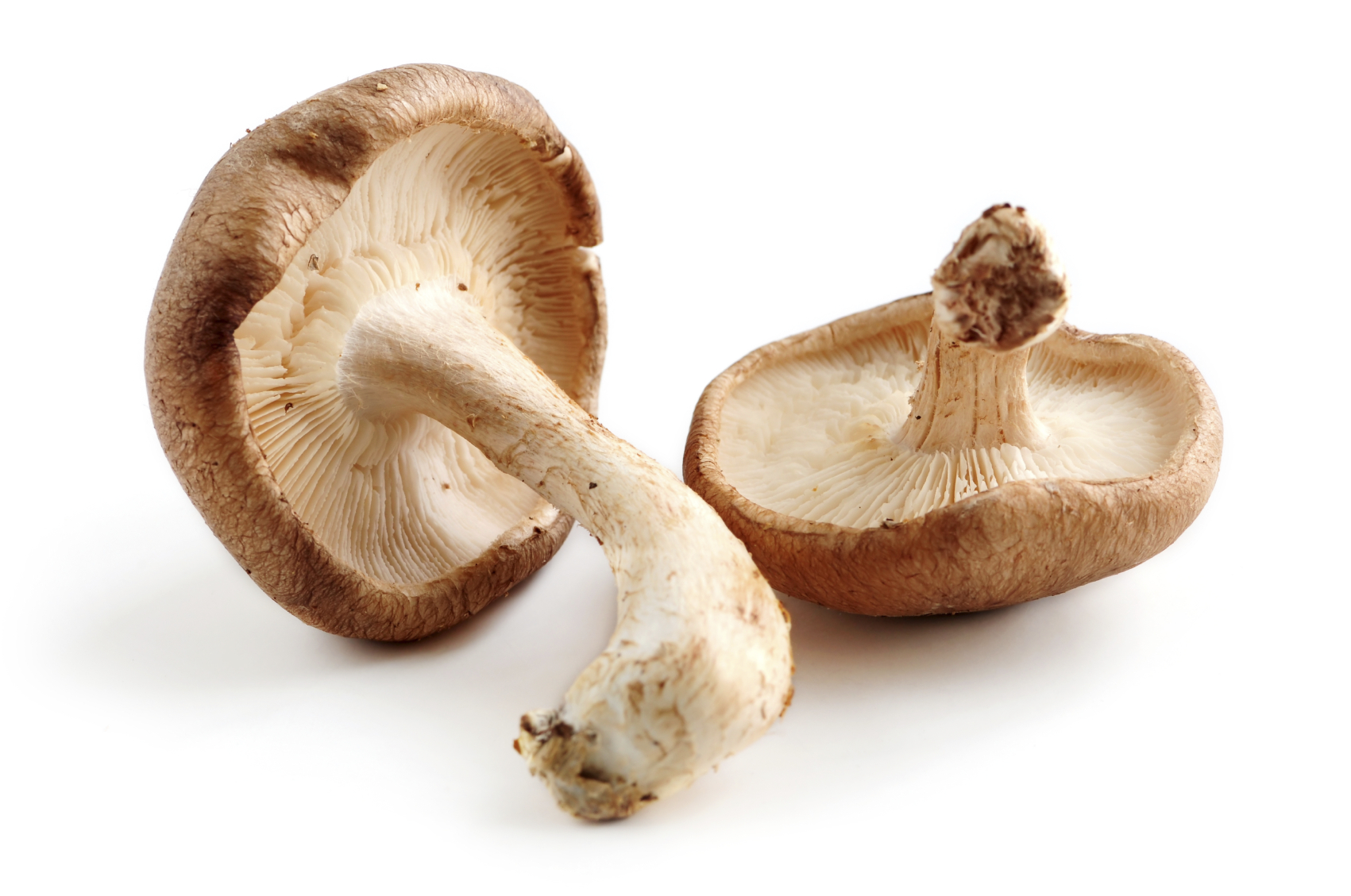 Shiitake-mushrooms-contain-a-powerful-compound-that-may-help-erase-a-cancer-causing-virus.1-ad2997.jpg